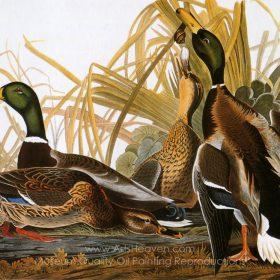Audubon Painting Reproductions For Sale, Reproductions of Famous Audubon  Paintings, Free Shipping, ArtsHeaven.com