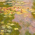 the-water-lily-pond